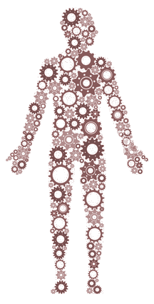 sophrologie et humain